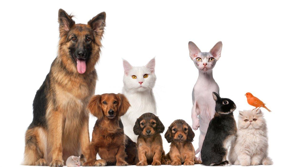 La présence d'un chien ou d'un chat est bénéfique pour le patient